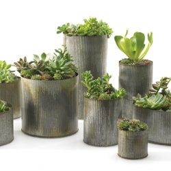 Norah Tin Collection
