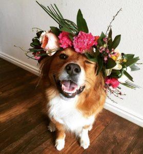flower crown dog